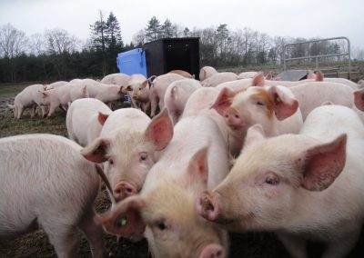 Frostfri vanddispenser i samarbejde med Udviklingscenter for husdyr på friland